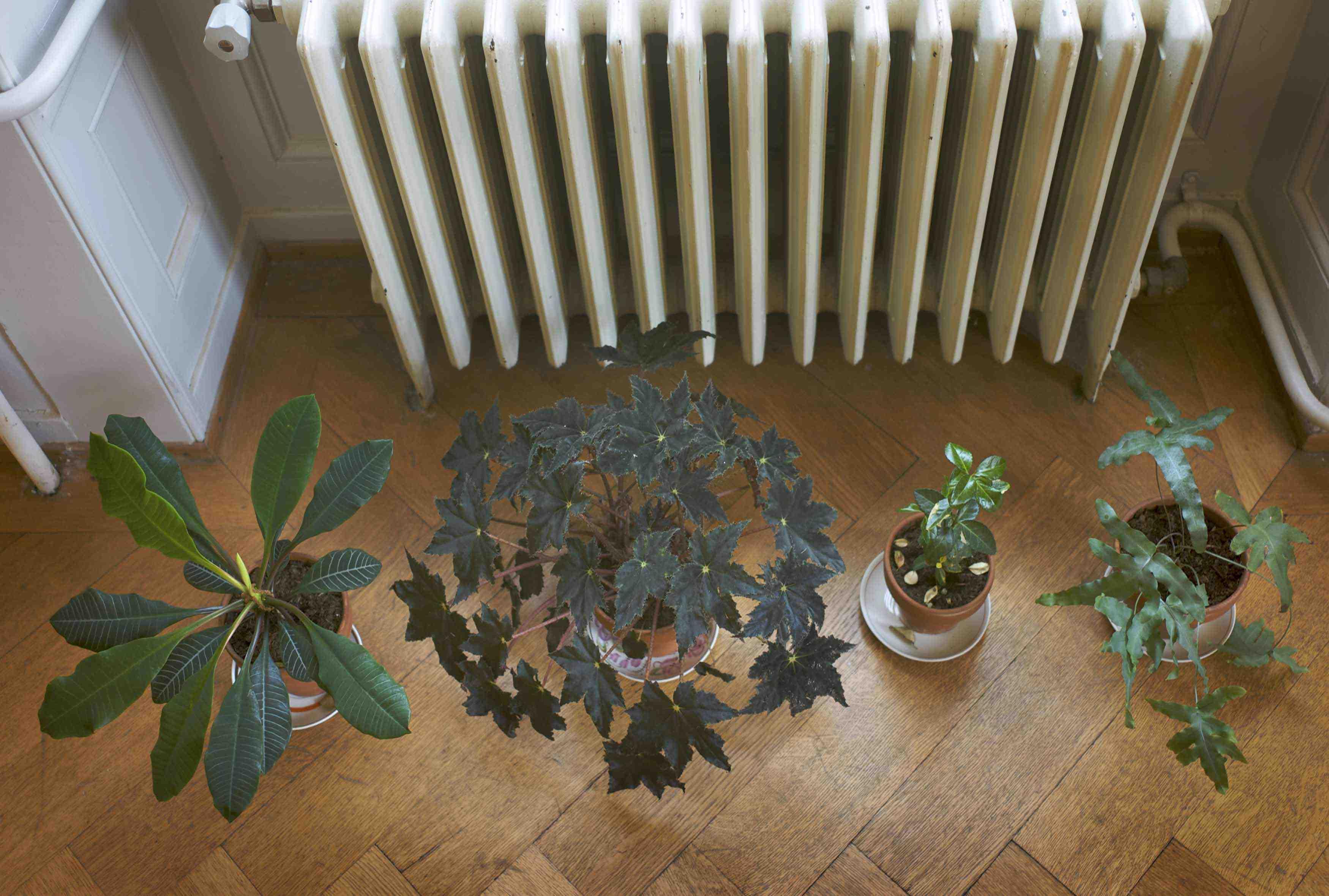 2009 villa sovietica web 20